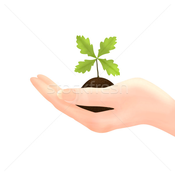 Hand holding Oak Sapling on White Stock photo © frannyanne