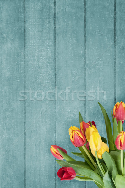 Bouquet of Tulips on Blue Wood Plank Background Stock photo © frannyanne