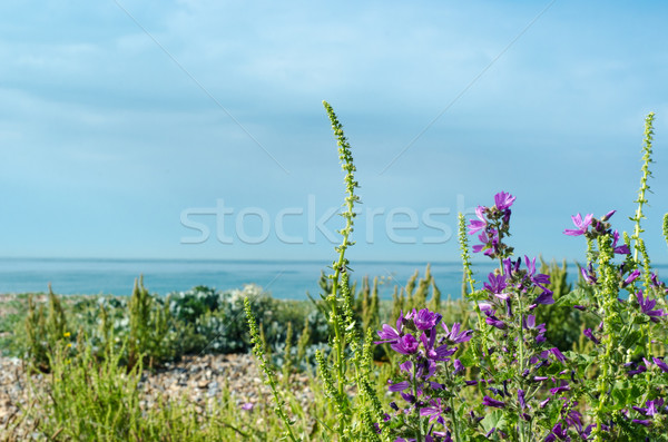 Flora meridional Inglaterra playa Foto stock © frannyanne