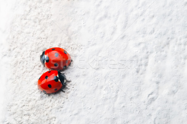 Two Red Ladybirds Facing Opposite Directions on White Stone Surf Stock photo © frannyanne