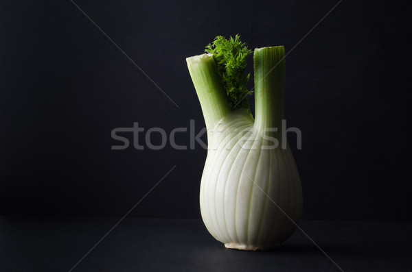 Fennel Bulb on Black Background Stock photo © frannyanne