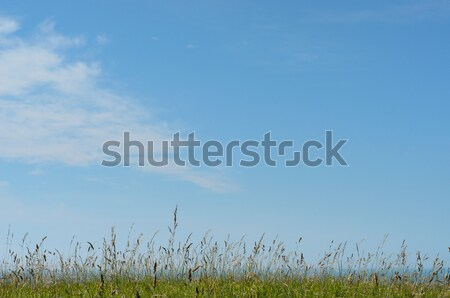 Sunny Meadow with Blue Sky Stock photo © frannyanne