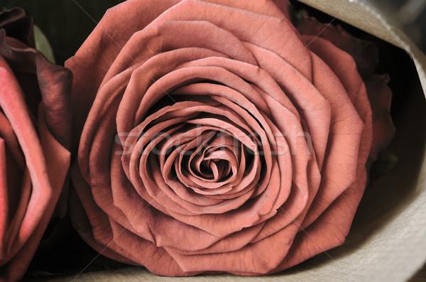 Rose Bouquet Macro - Vintage Stock photo © frannyanne