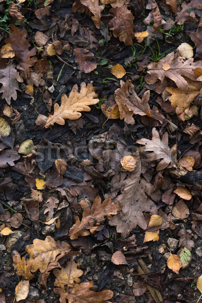 Autumn Leaves on Wet Earth Background from Above Stock photo © frannyanne