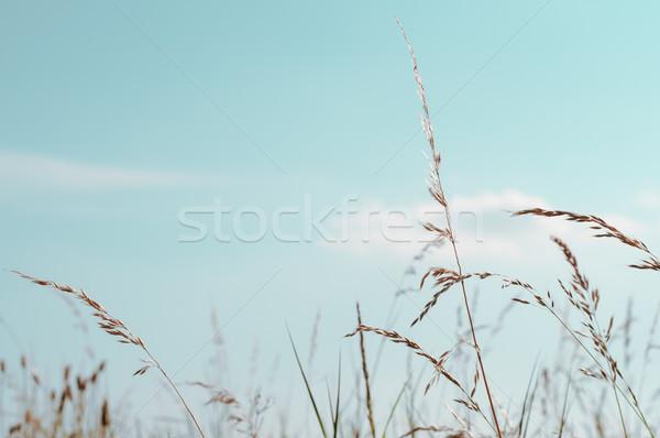 Magas vad víz kék ég nyáridő görbület Stock fotó © frannyanne