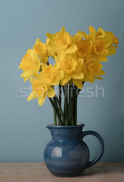 Yellow Spring Daffodils in Blue Jug on Table Stock photo © frannyanne