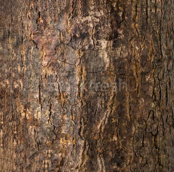Oscuro marrón agrietado árbol corteza textura Foto stock © frannyanne