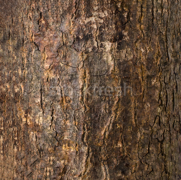 Dark Brown Cracked Tree Bark Texture Stock photo © frannyanne