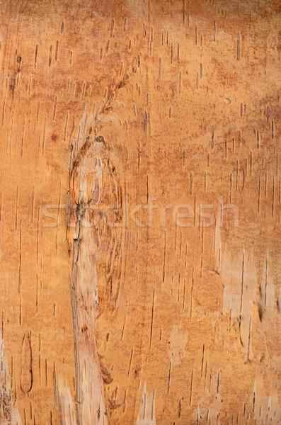 Birch Bark Texture Close Up Stock photo © frannyanne