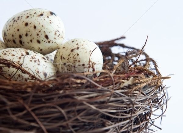 Bird Nest Close Up Stock photo © frannyanne