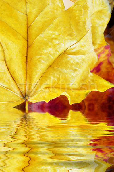Autumn Leaves Close Up Reflecting in Water Ripples Stock photo © frannyanne