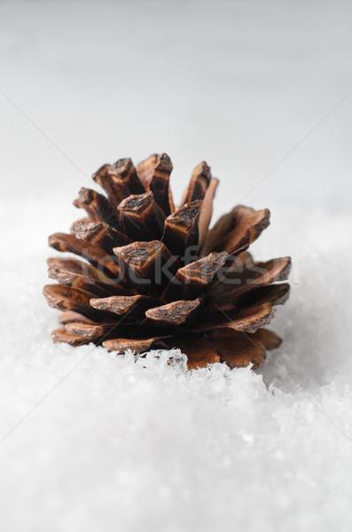 Naturalnych jodła stożek podróbka śniegu sosny Zdjęcia stock © frannyanne