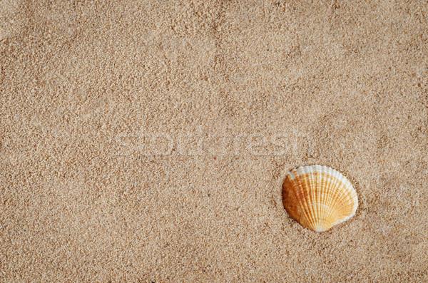 Shell golden Sandstrand Reise senken richtig Stock foto © frannyanne