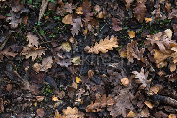 Stock photo: Autumn Leaves on Wet Earth Background from Overhead