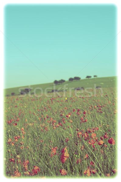 Wild Summer Poppy Field - Retro - Framed Stock photo © frannyanne