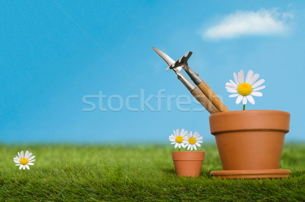 Stock photo: Potting Tools on Grass with Daisies