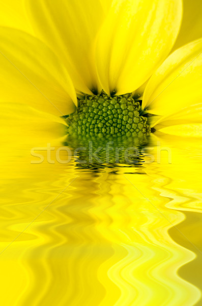 Yellow Flower Reflected in Watery Ripples Stock photo © frannyanne