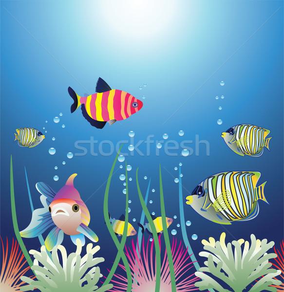 ベクトル 水族館 カラフル 魚 オレンジ ストックフォト © freesoulproduction