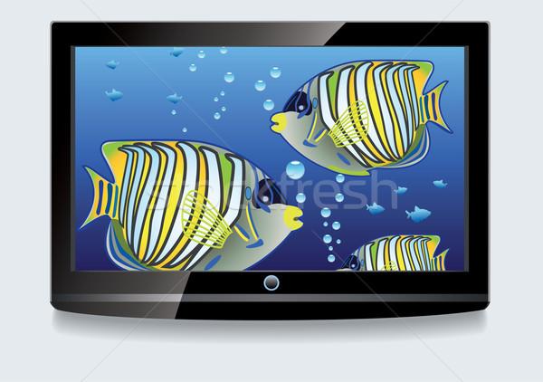 Stockfoto: Vector · lcd · scherm · kleurrijk · computer