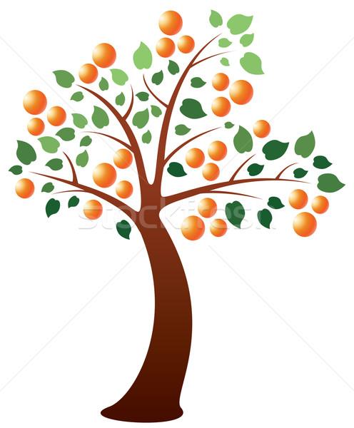 vector orange tree Stock photo © freesoulproduction