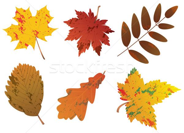 Stok fotoğraf: Vektör · ayarlamak · sonbahar · yaprakları · ağaç · soyut · arka · plan