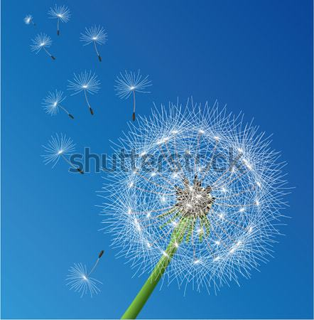 vector  dandelion seeds blown in the wind Stock photo © freesoulproduction
