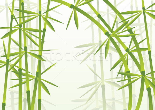 bamboo forest Stock photo © freesoulproduction
