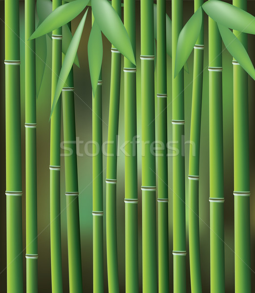 bamboo, vector illustration  Stock photo © freesoulproduction