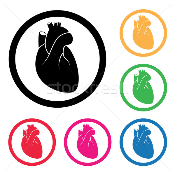 vector human heart cardio icon  Stock photo © freesoulproduction
