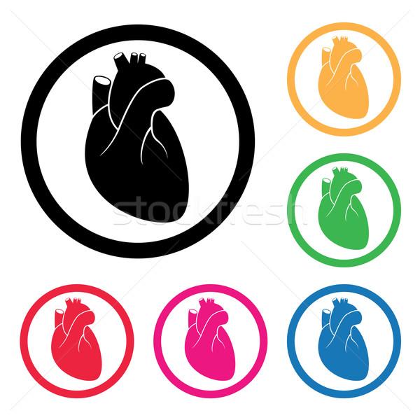 Vetor humanismo coração cardio ícone médico Foto stock © freesoulproduction