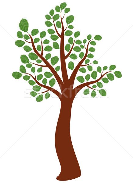 ベクトル ニレ ツリー 木材 葉 庭園 ストックフォト © freesoulproduction