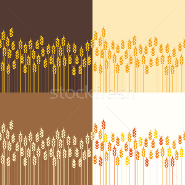vector seamless repeating wheat or rye background patterns Stock photo © freesoulproduction