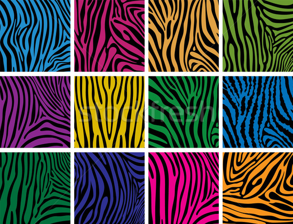 Stock photo: vector set of colorful skin textures of zebra