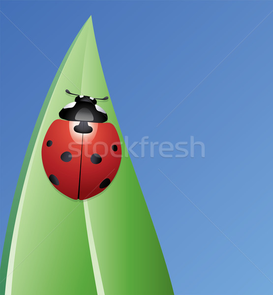 vector ladybird on a leaf  Stock photo © freesoulproduction