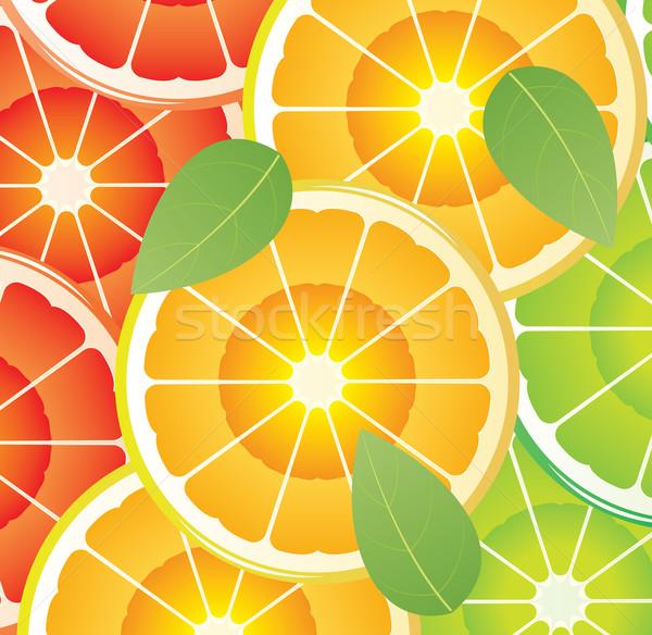 Stock fotó: Citrus · szeletek · vektor · különböző · színek · étel