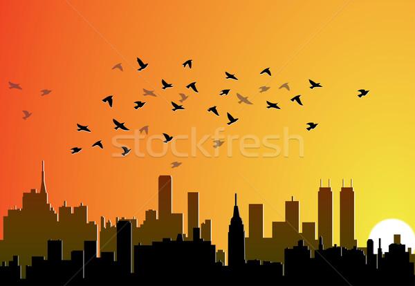 Stock fotó: Város · repülés · madarak · vektor · égbolt · iroda