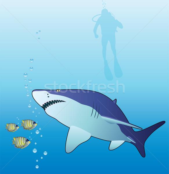 Vettore squalo tropicali subacquea Foto d'archivio © freesoulproduction