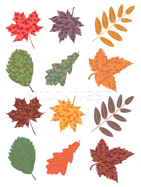 vector colorful autumn leaves Stock photo © freesoulproduction