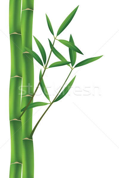 Vetor bambu grama floresta abstrato natureza Foto stock © freesoulproduction