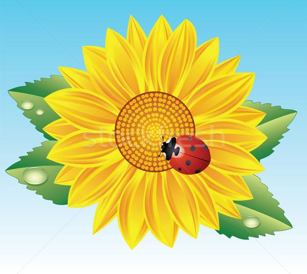 Napraforgó piros katicabogár vektor virág nap Stock fotó © freesoulproduction