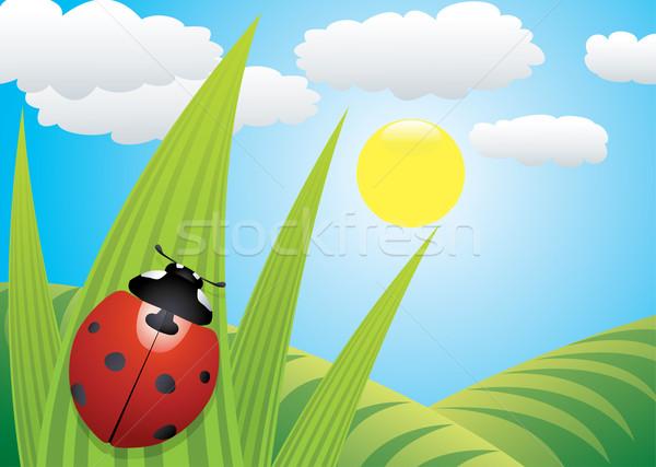Uğur böceği yaprak vektör gökyüzü bahar çim Stok fotoğraf © freesoulproduction