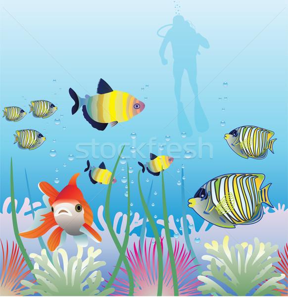 Vektör tropikal sualtı balık Stok fotoğraf © freesoulproduction