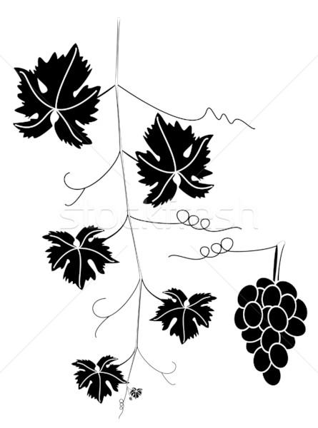 Stock photo: grape vine