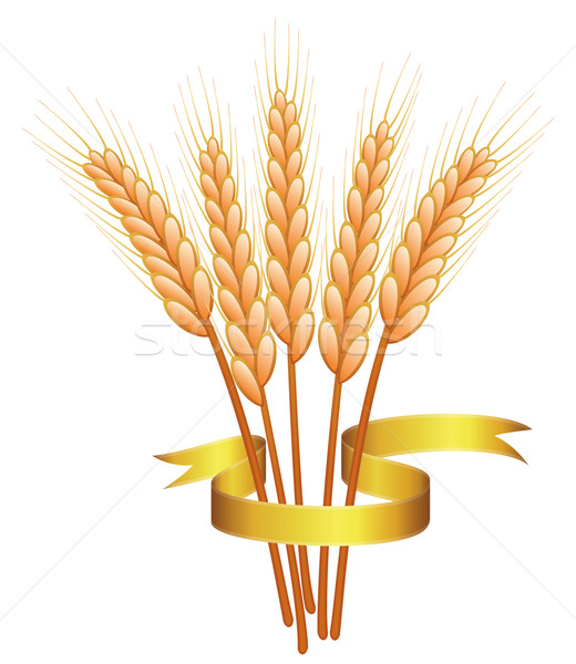 bunch of vector wheat ears  Stock photo © freesoulproduction