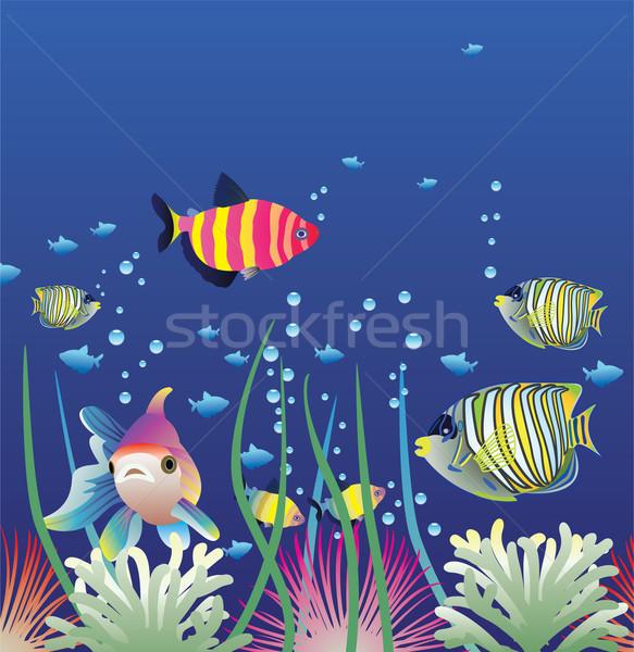 вектора аквариум красочный рыбы оранжевый Сток-фото © freesoulproduction