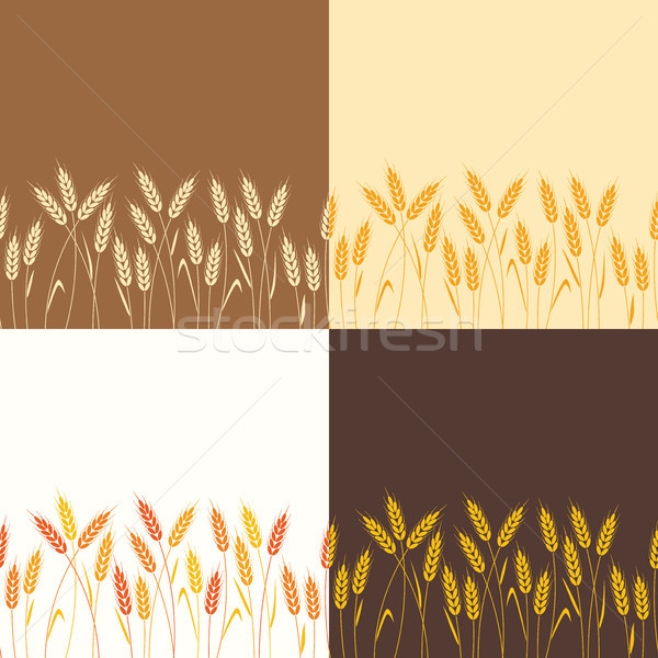 vector collection of seamless repeating wheat backgrounds Stock photo © freesoulproduction
