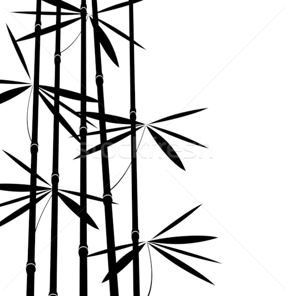Blanc noir bambou texture arbre herbe forêt Photo stock © freesoulproduction