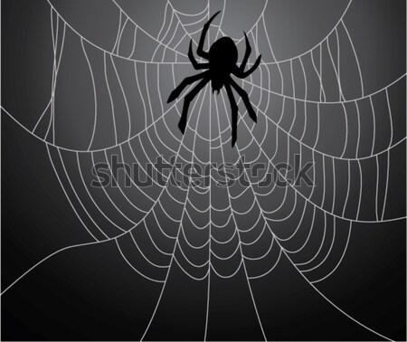vector spider, web and a caught fly Stock photo © freesoulproduction
