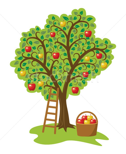 vector design of single apple tree with fruits, basket and ladde Stock photo © freesoulproduction