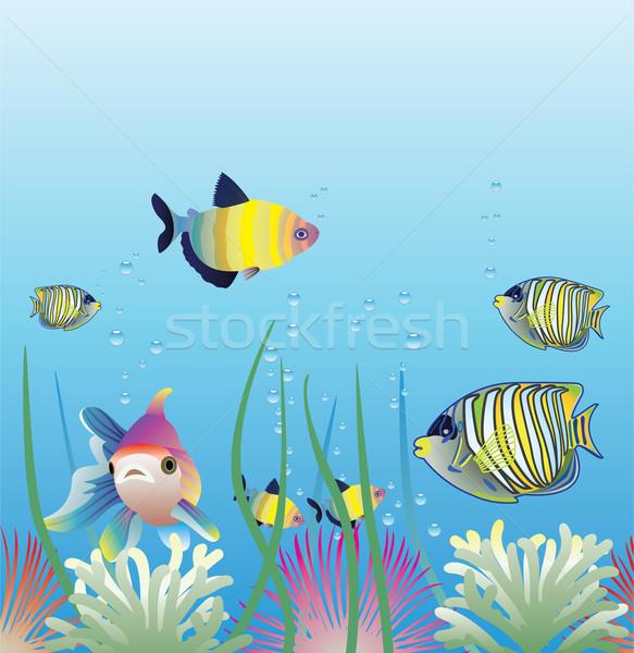 ベクトル 水族館 魚 オレンジ 海 ストックフォト © freesoulproduction